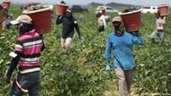 Sistem Pangan Rapuh, Dunia Hadapi Risiko Kelaparan di Tengah Wabah Corona
