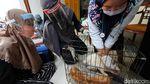 Pengobatan Kucing Gratis dan Kenduri Satwa di Solo