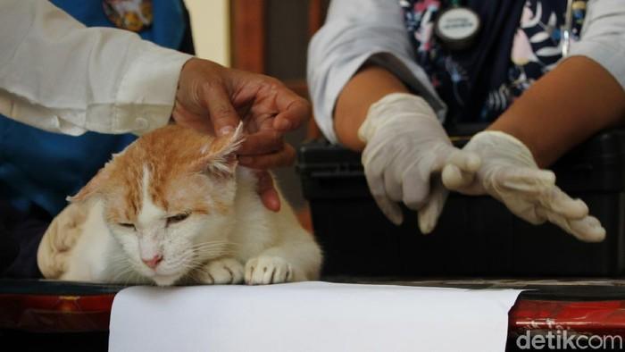 Relawan pecinta satwa yang tergabung dalam Cat Lover Peduli COVID-19 mengikuti pengobatan gratis untuk kucing saat acara Kenduri Satwa di Galeri Joli Jolan Solo, Jawa Tengah, Sabtu (13/6).
