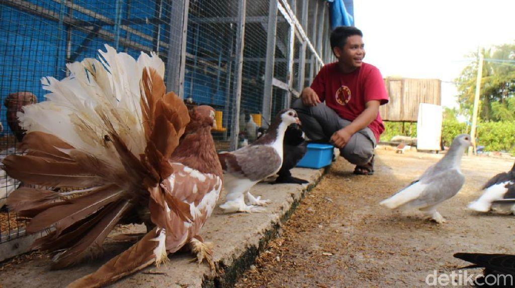 Dari Hobi, Remaja di Maros Bangun Bisnis Merpati Hias Buat Biaya Kuliah