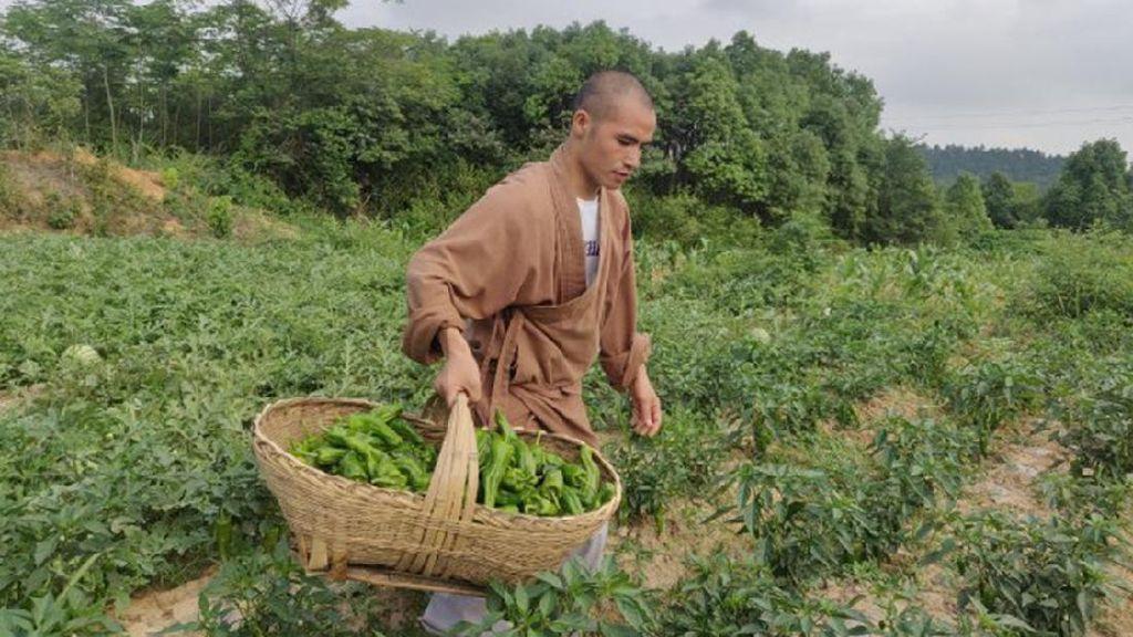 Kuil Berusia 1.300 Tahun Ini Tawarkan Sayuran Gratis di Sosial Media