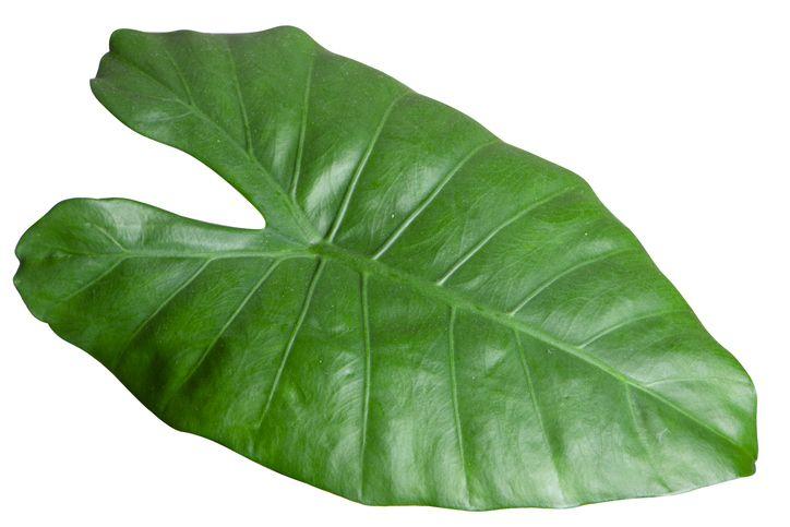 Ragam daun pembungkus tempe