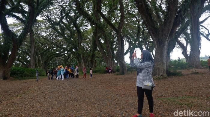 wisata di banyuwangi di tengah new normal