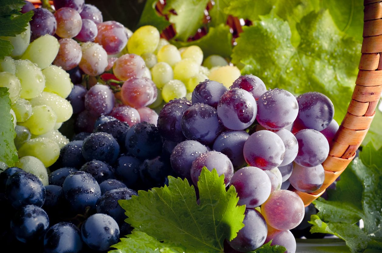 Fresh grapes and basket composition.
