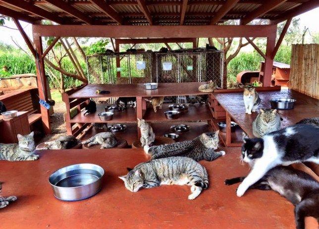 Negara Konsumsi Daging Kucing