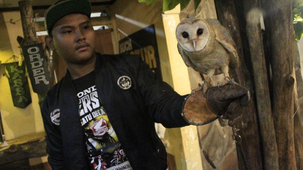 Sensasi Asyik Ngopi di Dalam Kandang Burung Hantu
