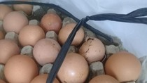 Bulog Jabar Segera Ganti Telur Busuk Bansos di Tasikmalaya