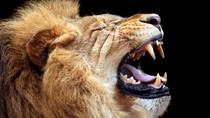 Tembak Singa Bayar Rp 700 Juta, Tulangnya Jadi Obat Seks