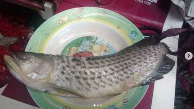 Viral ikan arwana peliharaan digoreng ayah