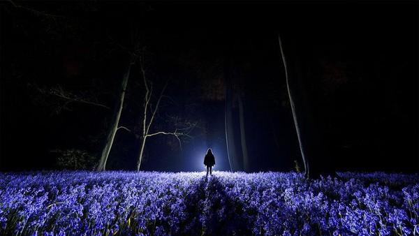 Floramalam itu sangat kontras dengan yang ada di siang hari. Seperti saat di mana bunga bluebell telah berkembang dengan cemerlang. Semburan obor membantu mengisolasi warna safir mereka terhadap kegelapan di sekitarnya.