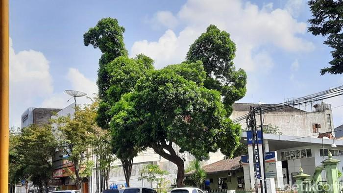 Pohon berbentuk seperti ayam raksasa yang viral di Yogyakarta, Rabu (17/6/2020).