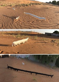 panorama hewan gagal