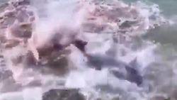 Viral Lumba-Lumba Bertarung-Berdarah di Pantai Bali, Ini Faktanya