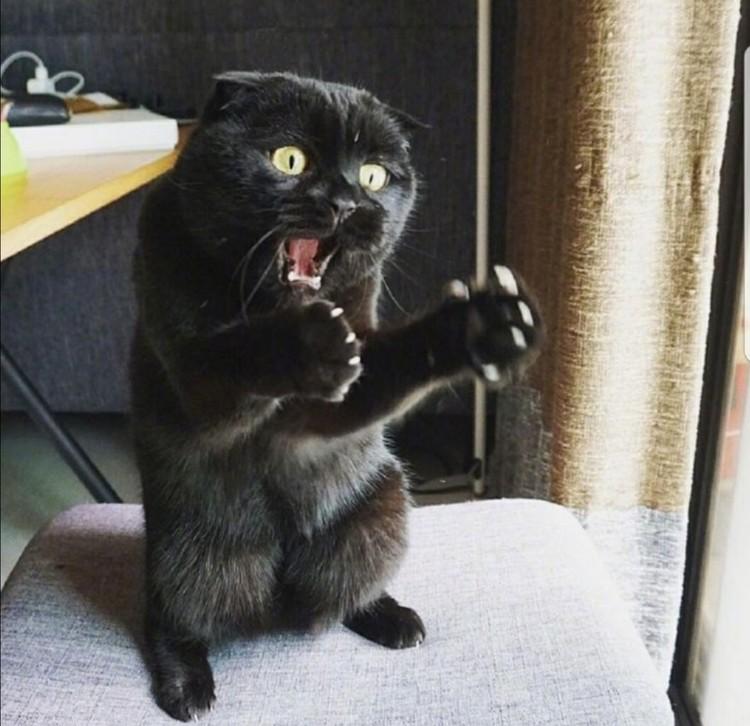 ekspresi kucing weekend