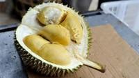 Gajah hingga Monyet Juga Doyan Durian, 5 Cerita Ini Buktinya