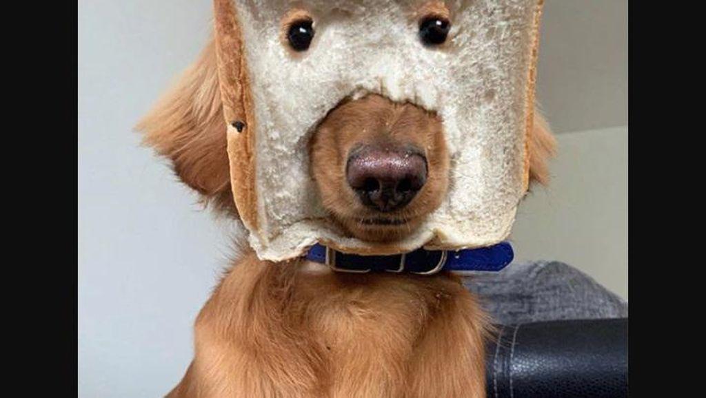 Gemas! Begini Jadinya Kalau Anjing Pakai Topeng Roti Tawar