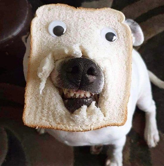 Anjing Lucu Pakai Topeng Roti Tawar