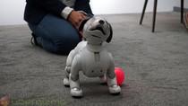 Robot Anjing Milik Sony Bisa Sambut Tuannya di Depan Pintu