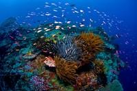 Surga bawah lautnya juga tak kalah indah. (Christmas Island)