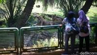 Pembatasan jumlah pengunjung juga dilakukan di Taman Margasatwa Ragunan. Pengunjung hanya diperbolehkan warga yang memiliki KTP DKI Jakarta.