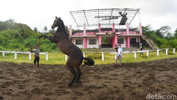 Atraksi kuda pacu yang perkasa ini pun jadi tontonan tersendiri bagi wisatawan yang liburan ke Pantai Madasari. (Faizal Amiruddin/detikcom)