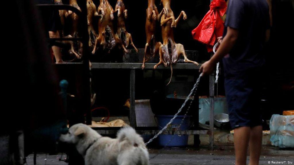 Festival Daging Anjing di China Kembali Digelar