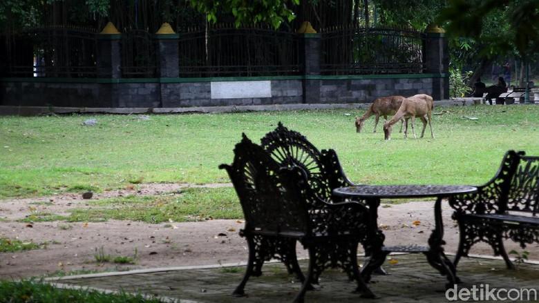 Taman Balekambang yang berada di kawasan Solo kembali dibuka untuk umum. Meski telah dibuka, kawasan itu masih sepi dari pengunjung.