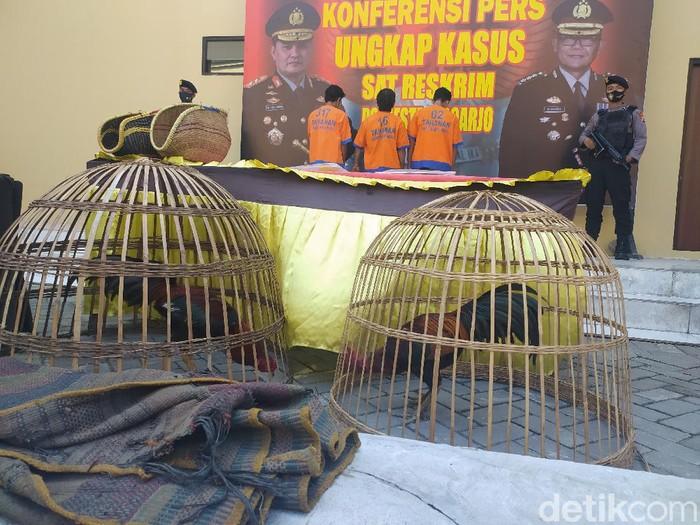 Polisi menangkap empat warga yang judi sabung ayam di Wonoayu, Sidoarjo. Salah satu dari mereka reaktif saat dirapid test.