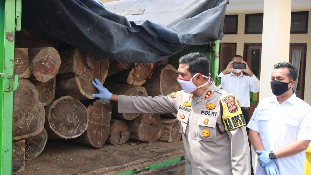 Polres Majalengka Ringkus Komplotan Pembalakan Liar Lintas Provinsi