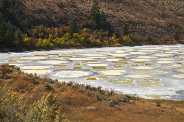 Danau ini bernama Spotted Lake atau Danau Kliluk. Kandungan air danau mempunyai kandungan senyawa magnesium sulfat, kalsium, natrium sulfat, mineral, dan perak yang sangat tinggi. (iStock)