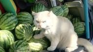 Mau Kerja Diawasi Kucing Jutek Ini?