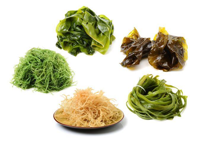 5 Manfaat Rumput Laut