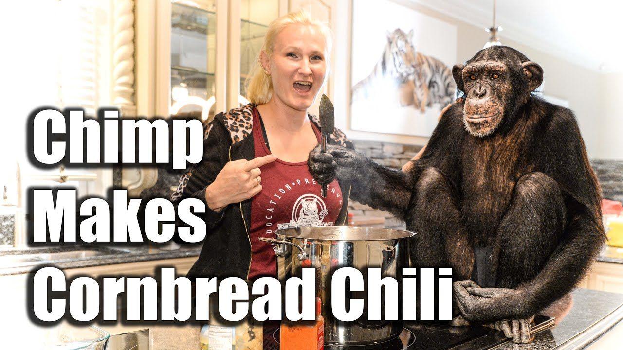 Simpanse Jadi YouTuber yang Jago Masak