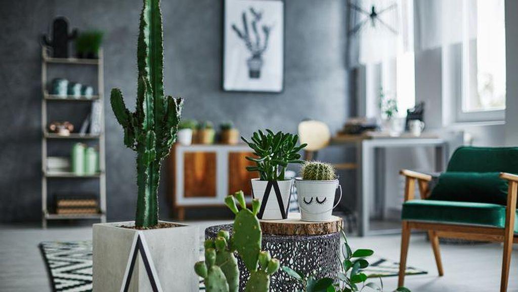 10 Tanaman Hias Indoor yang Cocok untuk Mempercantik Rumah
