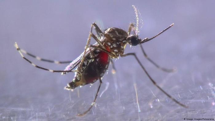 Waspada Ancaman DBD di Tengah Pandemi Covid-19