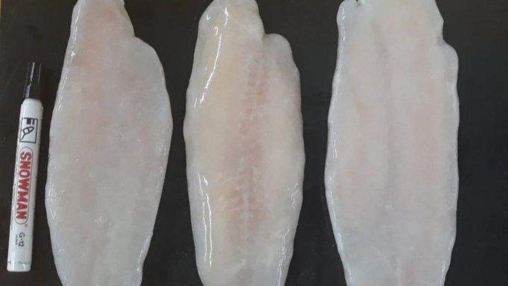 Ikan Dori Adalah Ikan Patin, Ini Kata Menteri Kelautan