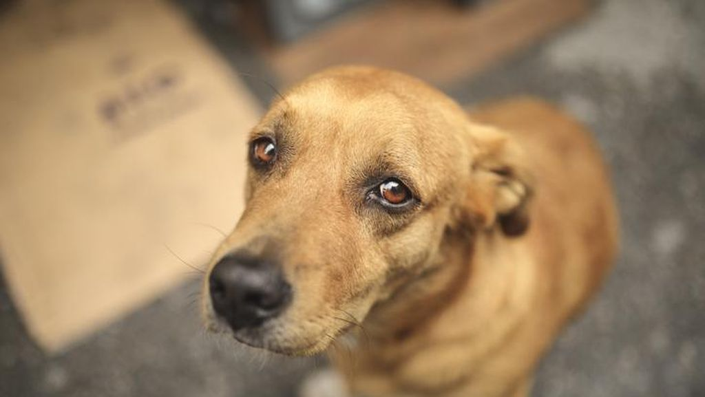 Soal Viral Pria Setubuhi Anjing, Polda Sulsel: Kita Pastikan TKP Dulu