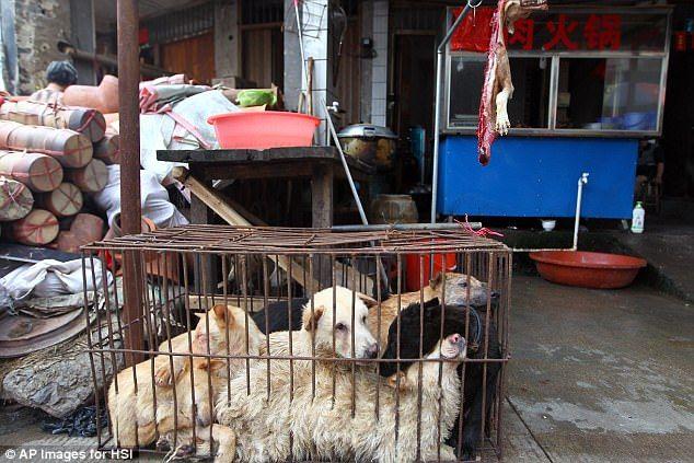 Festival daging anjing Yulin