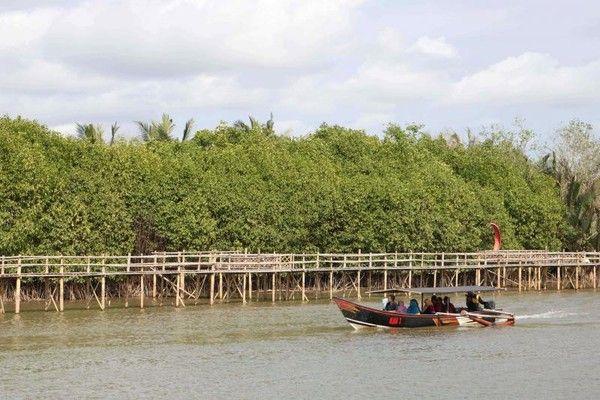 Hutan Mangrove Pantai Congot Kulon Progo