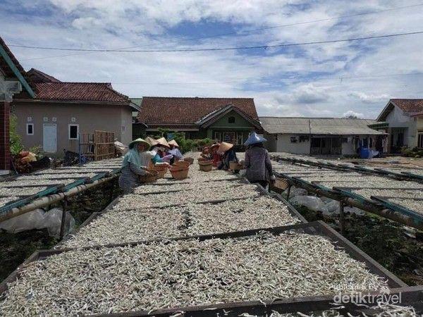 Pulau Pasaran penghasil ikan teri