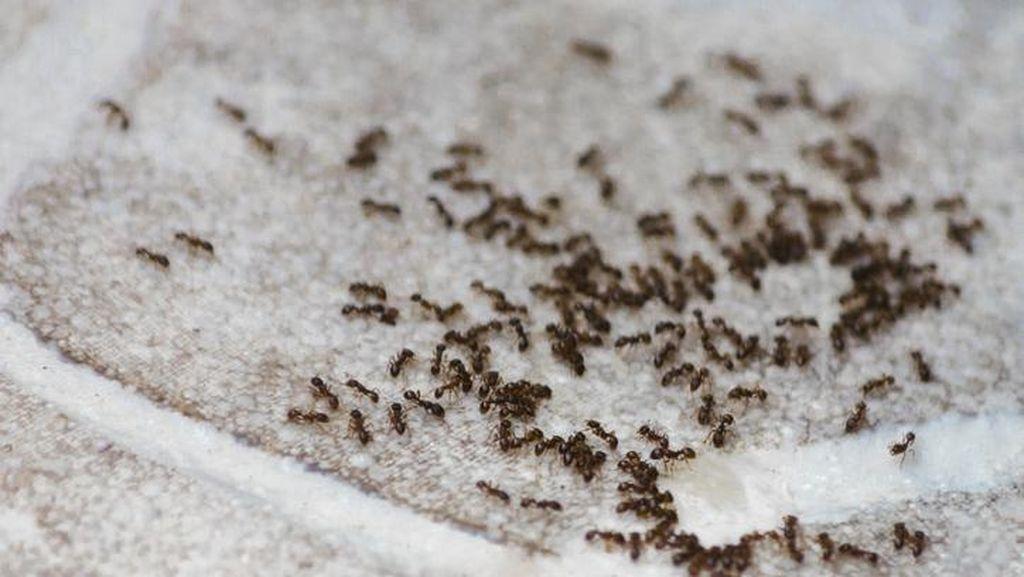 Nenek Sedekah Gula untuk Semut hingga Warung Bebek Diganggu 100 Jin