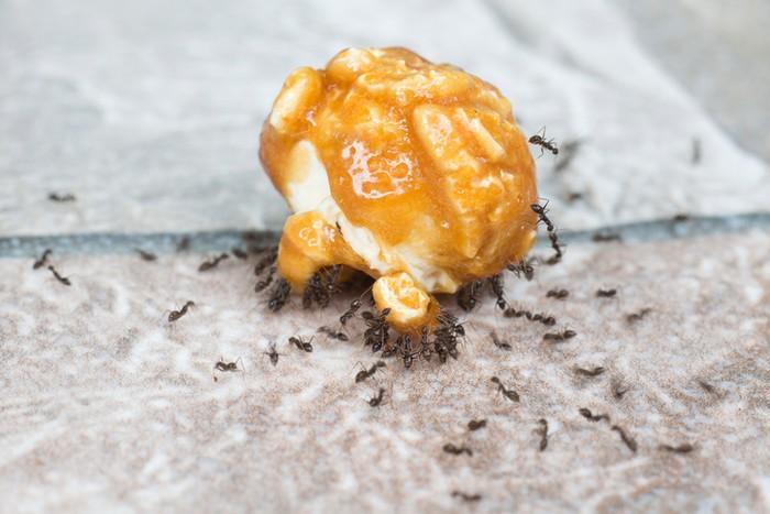 Sedekah gula merah ke semut