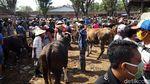 Bermasker, Begini Kesibukan Pedagang Pasar Hewan di Boyolali
