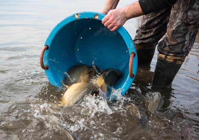ikan di ember