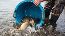 Ikan Ember Jadi Program Pertamina Bantu Masyarakat Jakut Ter-PHK