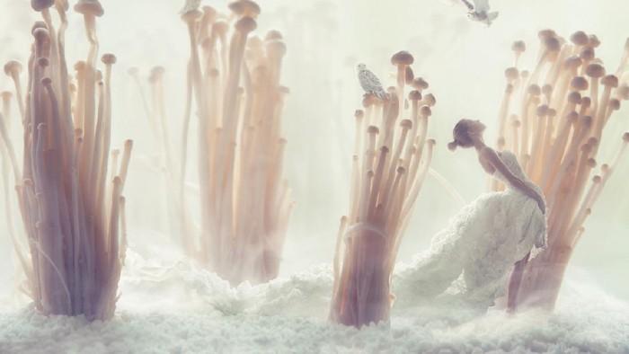 Enoki mushrooms closeup