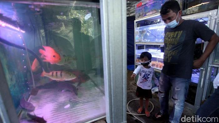 Pandemi COVID-19 membuat warga punya hobi baru selama diam di rumah, salah satunya merawat ikan hias. Tak heran, penjualan ikan hias pun meroket di masa pandemi