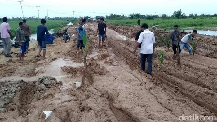 Warga di Kabupaten Rokan Hulu, Riau, menanam pohon pisang hingga sawit di tengah jalan yang rusak. Hal itu dilakukan sebagai bentuk protes warga.