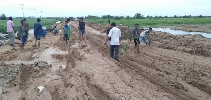 Warga di Riau protes jalan rusak dengan tanam pisang-sawit di tengah jalan (Chaidir-detikcom)