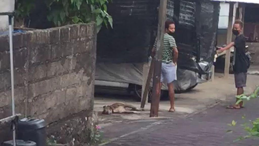 Pemilik Syok Anjingnya Mati Dipukul di Nusa Dua Bali, Tahu Kejadian dari Video
